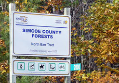 SimcoeCounty-forest